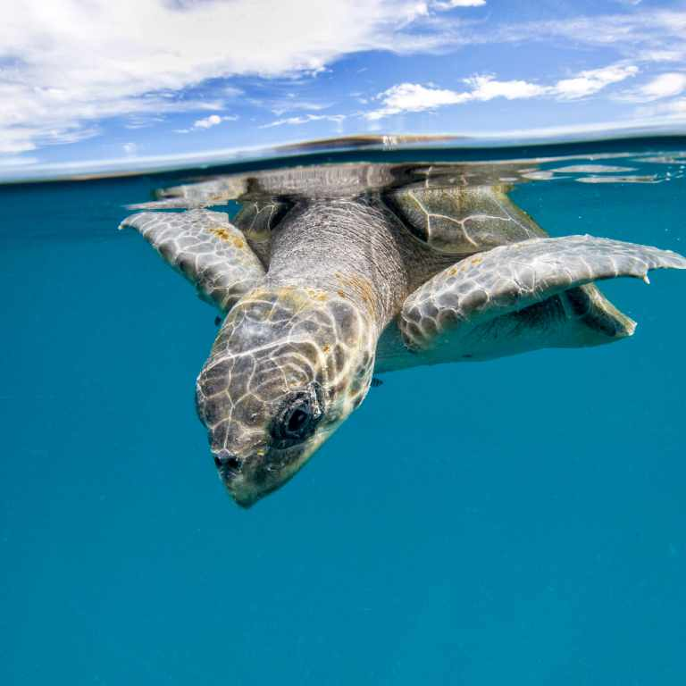Turtle and sky