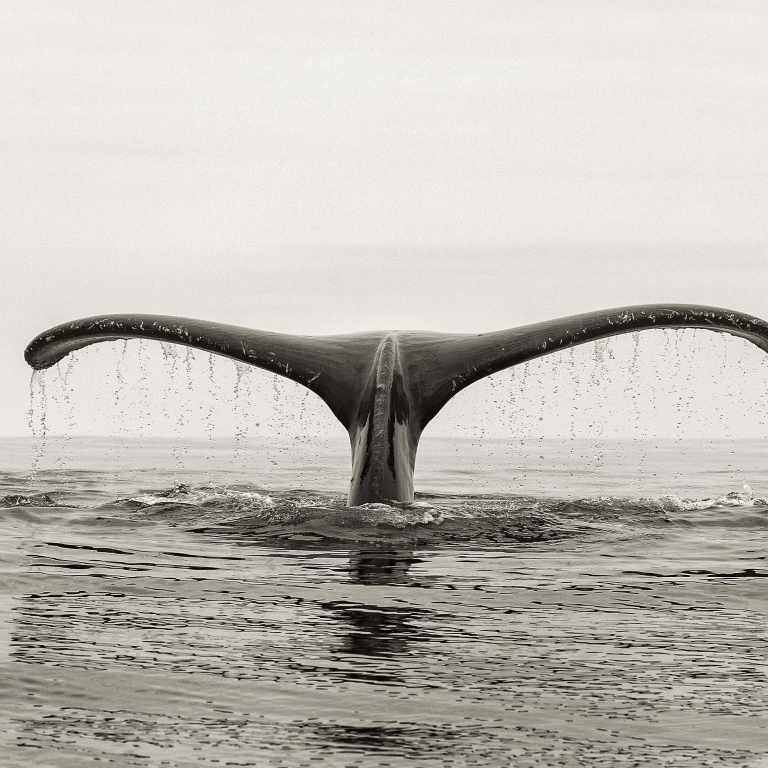 Whale tail 2